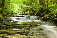 River Clywedog-1