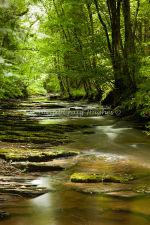 River Clywedog-2