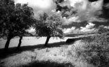 Trees Keighley Tarn