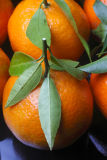 Oranges with leaves 1