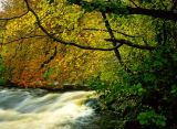 Autumn trees Wharfedale