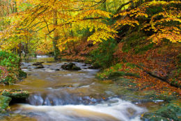 May Beck in autumn