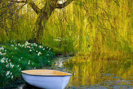 Willow Boat