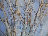 Winter trees at Warriston