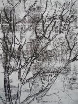 Silver birch at Warriston