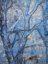 Birch at Victoria park