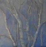 Silver birch in winter