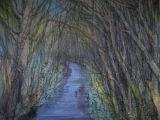 Warriston path in winter