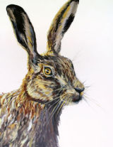 'March Hare' cards