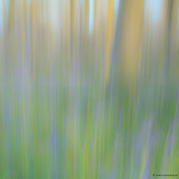 Abstract Bluebells